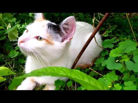 Смешные котята видео - FunKot