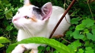 Наши КОШКИ И КОТЫ Видео Для Детей Кошка и Котята Смешные Животные для Детей Funny Cats and Kittens