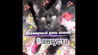 С Всемирным днём кошек! / Happy World Cat Day! / З Всесвітнім днем котів!!!