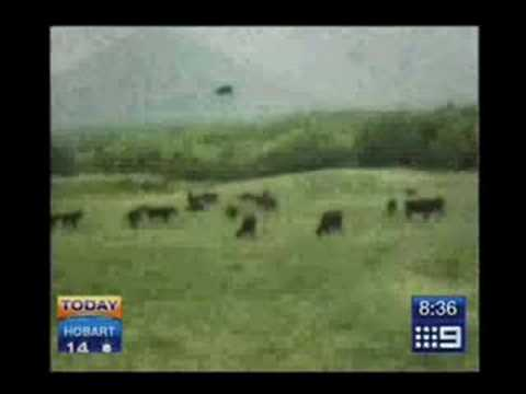 Cow Getting Abducted by Aliens on UFO - 100% Real Footage [Full Video]