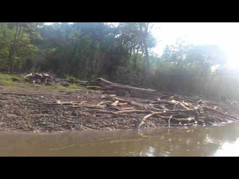 Amazônia - Rio Juma
