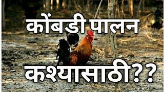 POULTRY FARMING # कोंबडी पालन कश्यासाठी ????