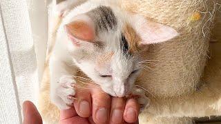 手を噛んで離さない子猫