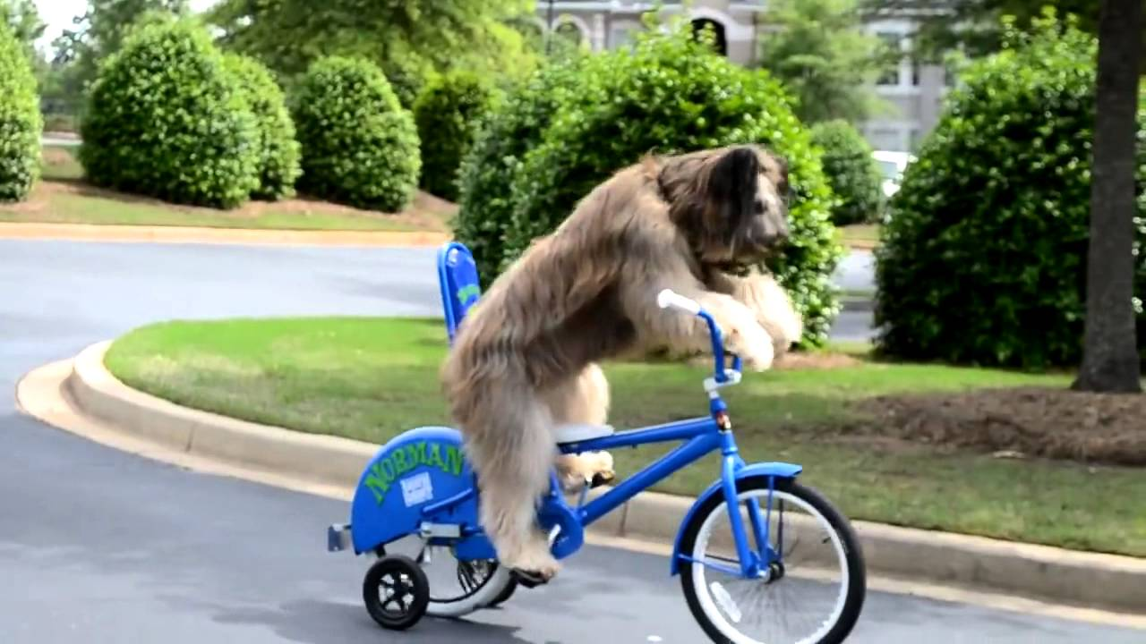 dog learning to ride a bike awesome youtube