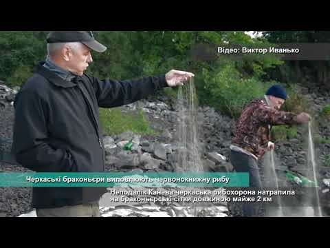 Телеканал АНТЕНА: Черкаські браконьєри виловлюють червонокнижну рибу