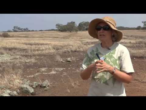 World101x: Full Interview with UQ Anthropologist Annie Ross