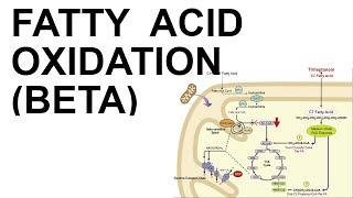Fatty Acid Beta Oxidation