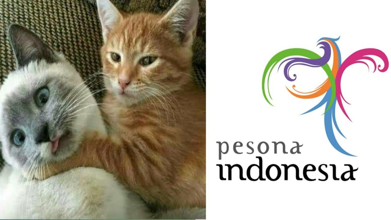 Parodi Pesona Indonesia Versi Kucing Bar Bar