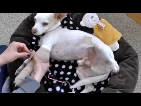 How to change spoon splint on a dog