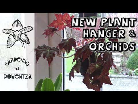New Plant Hanger, Orchids in Bloom & a Cactus