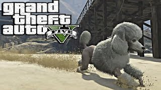 New Gta 5 - Play As A Poodle - Easter Egg Tutorial Guide Peyote Locations I Gta V Xbox One