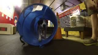 Tunnels Aframes And Fun At Group Class! Sit Means Sit Houston Dog Training