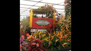 Grenada wins gold at RHS Chelsea Flower Show 2018