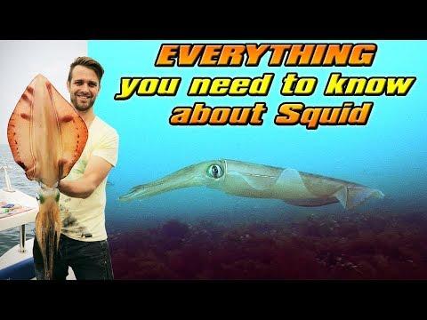 RAW Fishing Episode 1: Squid