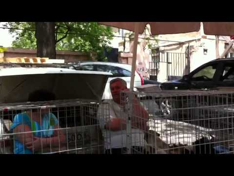 Odessa Ukraine outdoor dog market
