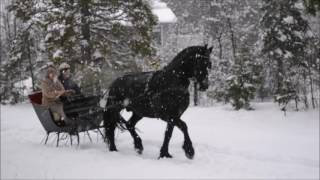 Sleigh - A New Year's Sleigh Ride | Friesian Horse