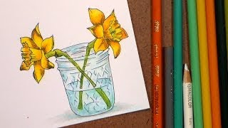 How to color daffodils with colored pencil and markers