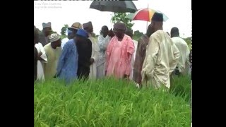 Watch Minister of State For Agriculture Speaks on Rice Farming In JIgawa
