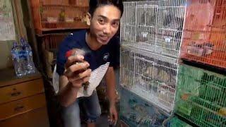 Download Video SURVEY HARGA BURUNG DI PASAR PRAMUKA PART 1 (Satu) MP3 3GP MP4