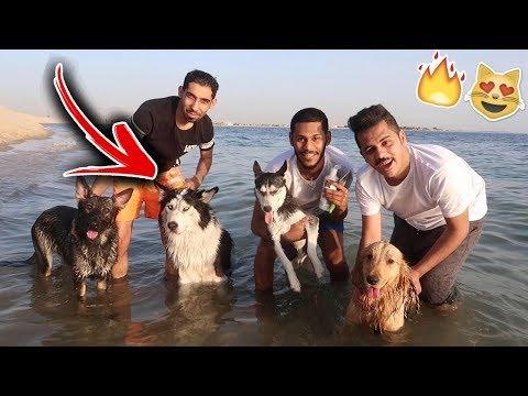 روشت روكي وكلابي داخل البحر !! ما توقعت الي صار 💔
