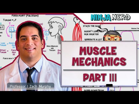 Myology | Muscle Mechanics | Types of Contractions & Levers | Part 3