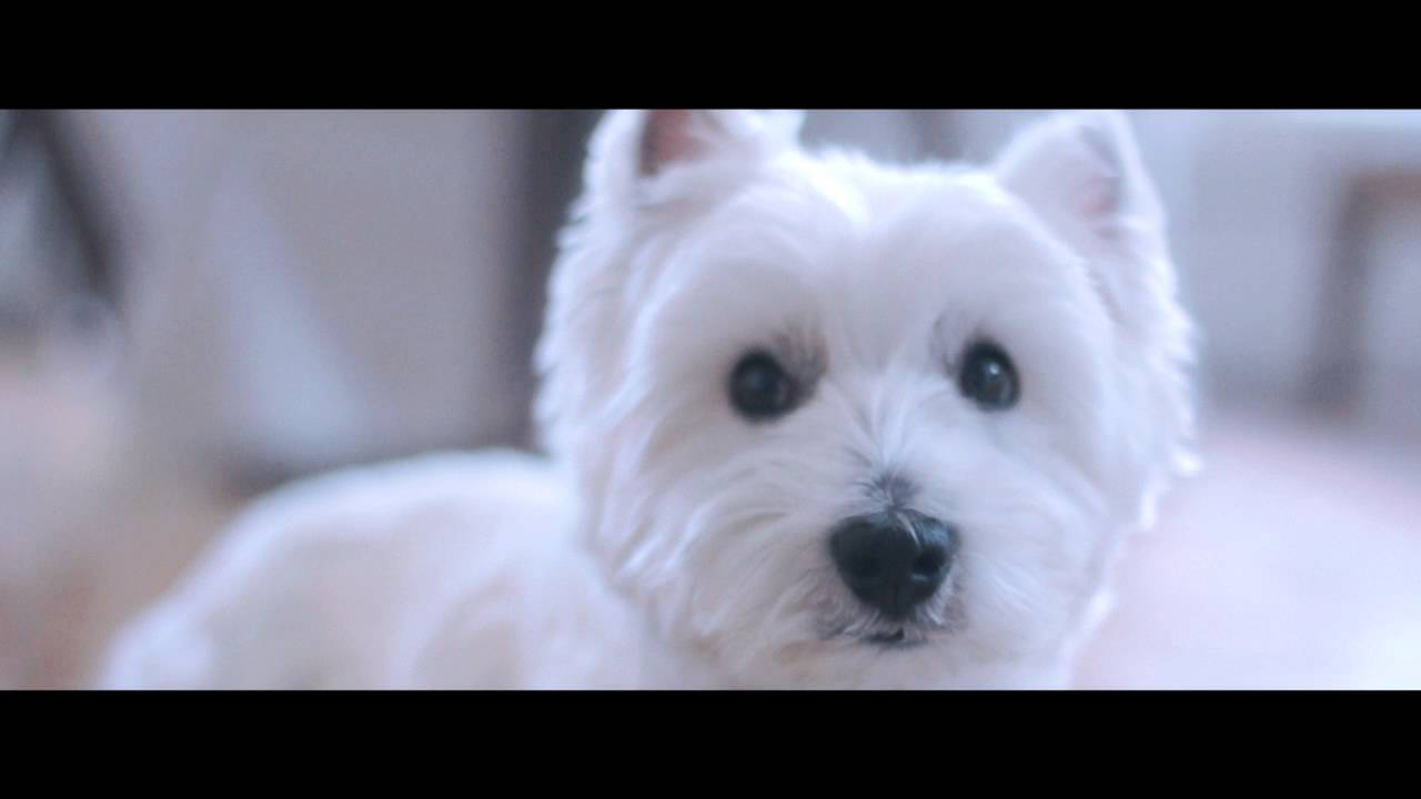 Purina Dog Food Commercial Dream