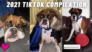 BOXER DOGS TIKTOK COMPILATION 2021