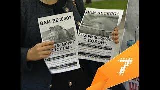 в Красноярске устроили пикет против дельфинария