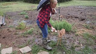 Caring for Dixie the Deer & Friends in a Storm