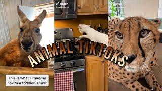 Animals  | TikyToky Compilations