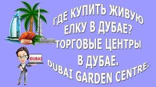 Где купить живую елку в Дубае|Торговые центры в Дубае|Dubai Garden Centre and ACE
