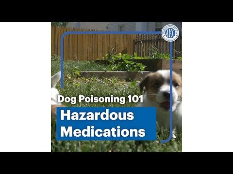 Dog poisoning 101 - Hazardous Medications