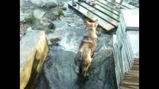 Собака лечит ноги в лечебной воде