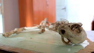 Скелет неопознанного животного нашли в Сарыагаше