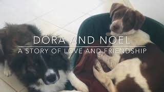 Dora and Noel: a story of love and friendship