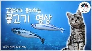 [고양이가 좋아하는 영상] 고양이에게 이 영상을 보여주세요! (바다 물고기)/VIDEO FOR CAT, 외출할 때, 혼자남은 고양이의 안정감, 분리불안, 고양이가 좋아하는 음악