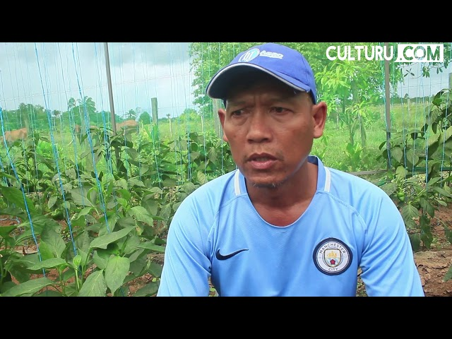 Kleinlandbouwer bezorgd over drugsexporten vanuit Suriname