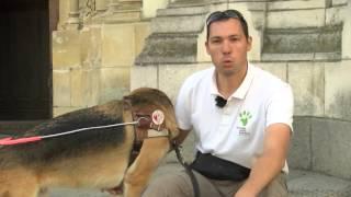Angers TV educateur canin francois Segard et Japlou chien guide d'aveugle