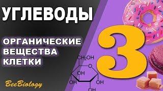 Углеводы • Органические вещества клетки  • Быстрые и медленные углеводы