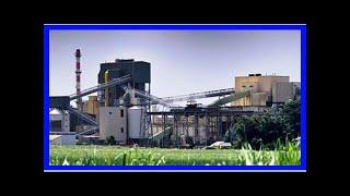 Breaking News | Molasses leak: Punjab Pollution Control board issues notice to Chadha Sugar mill ov