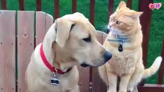 Hd funny cats and dogs compilation , very hilarious cats and dogs try to not laugh ^ ^