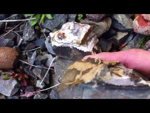 Amazing Bigg's Jasper Rock Hunting