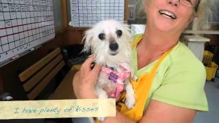 Penny, A Maltese Mix At  Muttville