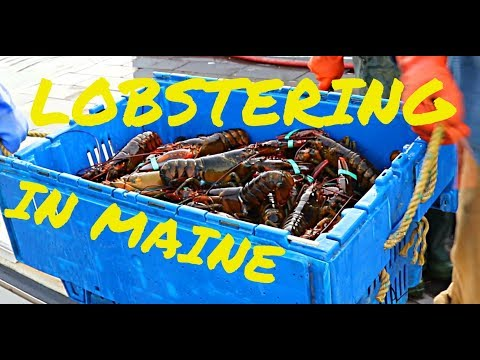 LOBSTERING IN MAINE DOCUMENTARY