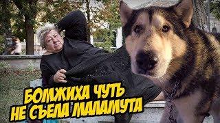 Маламут обрыгался от бомжихи / прогулка собак по Харькову