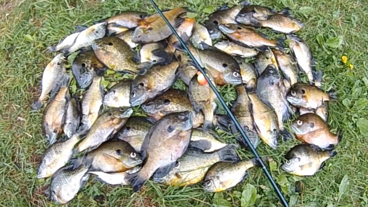 Bait fishing 126 fast bluegill bobber fishing with for Bluegill fishing bait