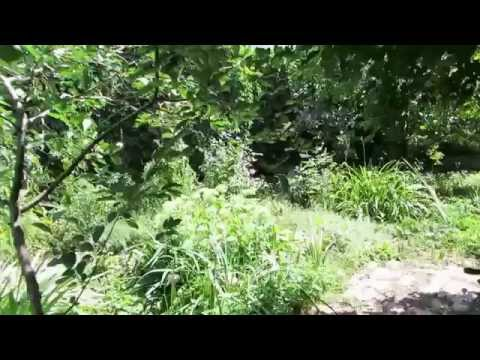 Summer garden in Rostov-on-Don, Russia