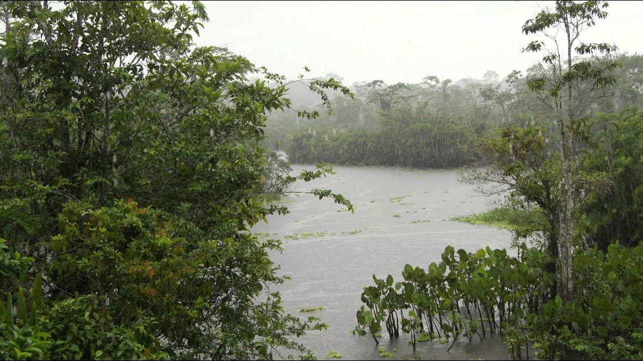 viaje por el rio napo entre coca y roca fuerte en el