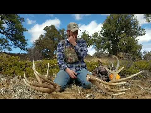 Elk shed Hunt. Brown elk and deer finally.