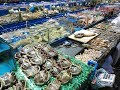 Chinese Seafood market in Shenzhen Fuyong town 4K 2018